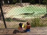 Saltwater crocodile enclosures