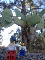 Large cactus plant on the tomato farm
